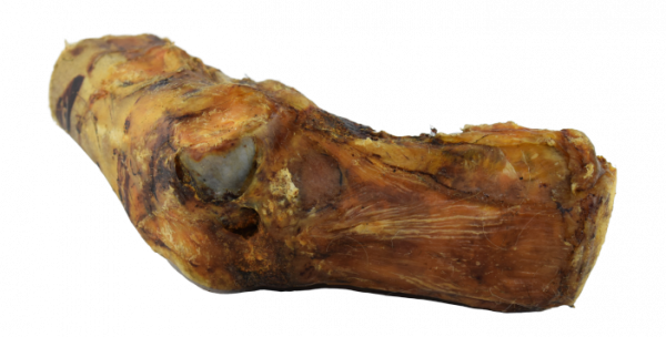 Pferde-Knochen mit Achillessehne klein